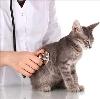 Ветеринарные клиники в Малоязе